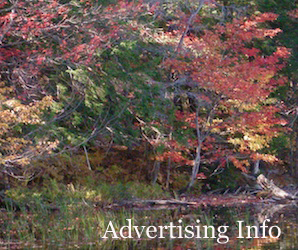 Leaves 300 x 250